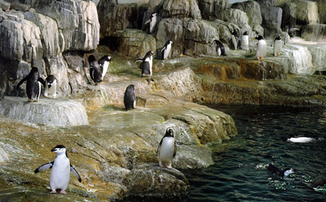 central_park_zoo