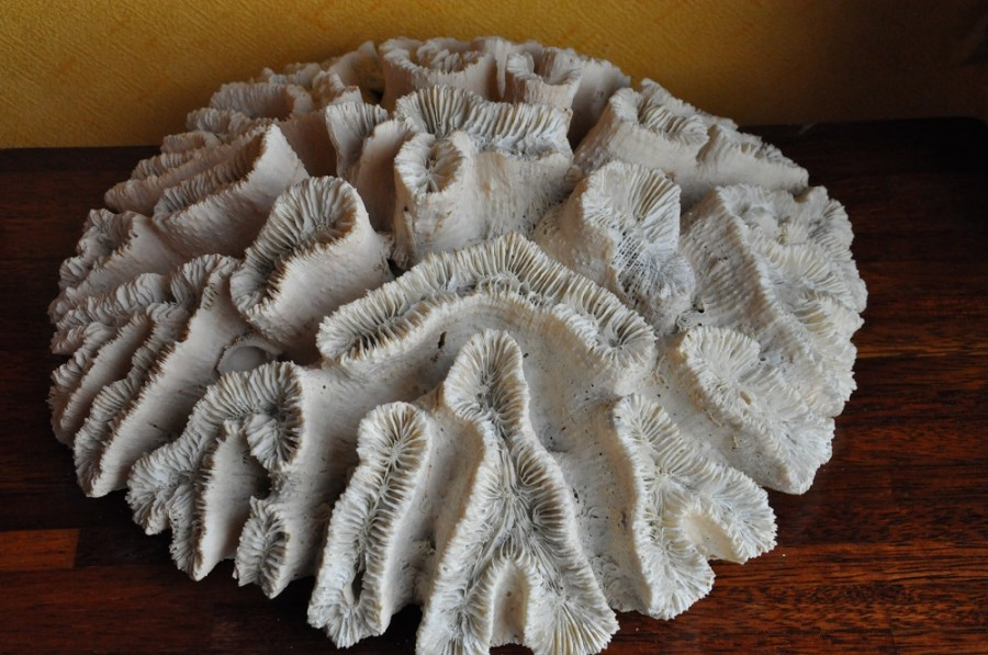 корал4