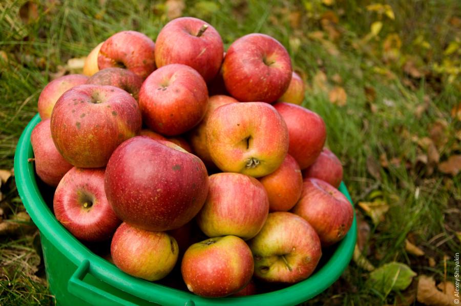 apples_fw