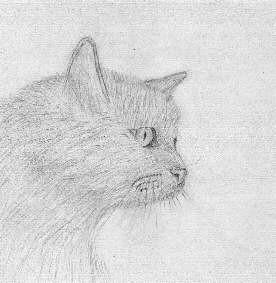 cat2b
