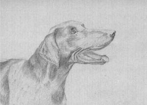 dog4b