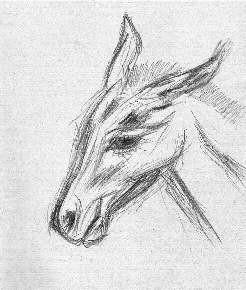 donkey_b
