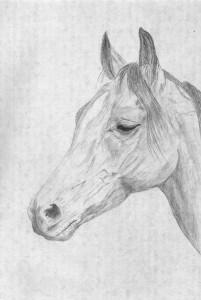 horse2a