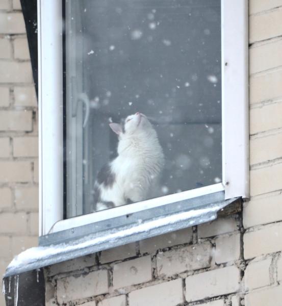 Падает снег...