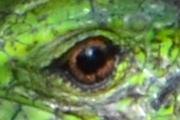 DSC_0936_eye