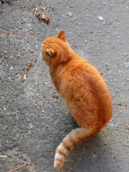 Котик цвета апельсина