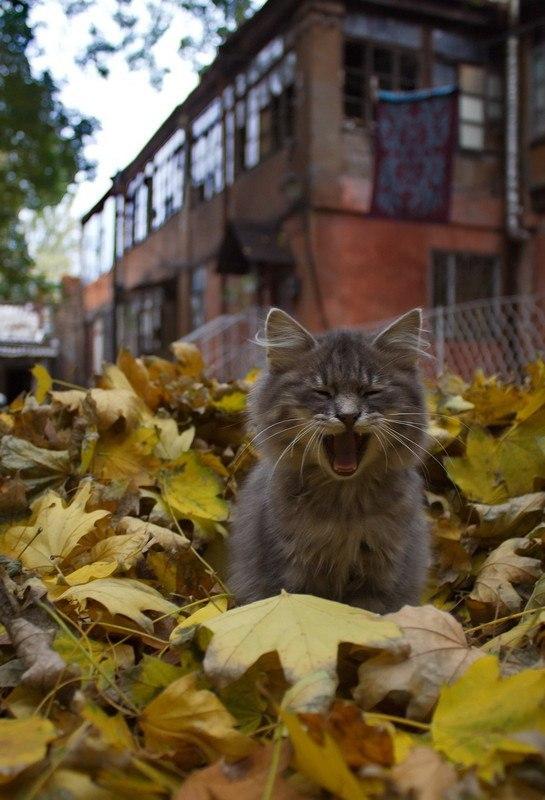 кот в отчаянии