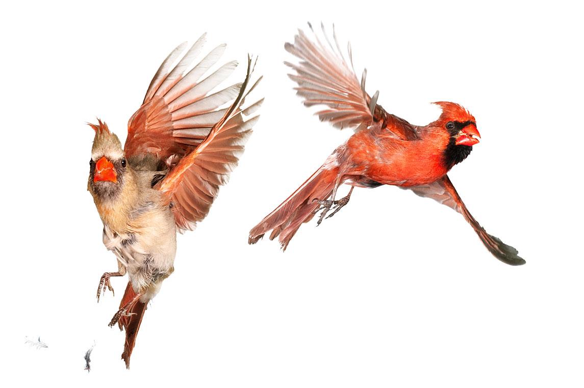 птички 7