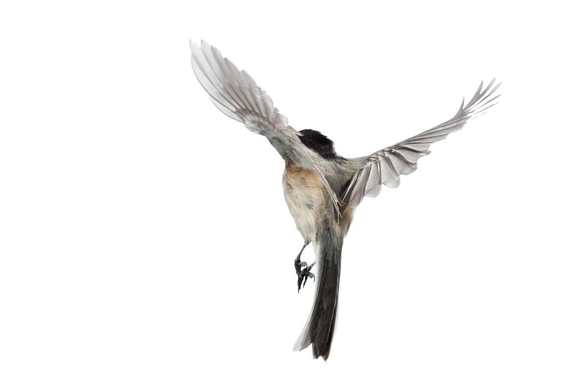 птички 1