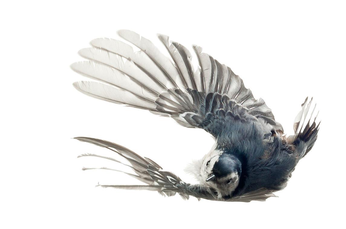 птички 2
