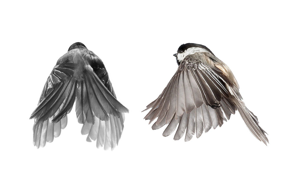 птички 4