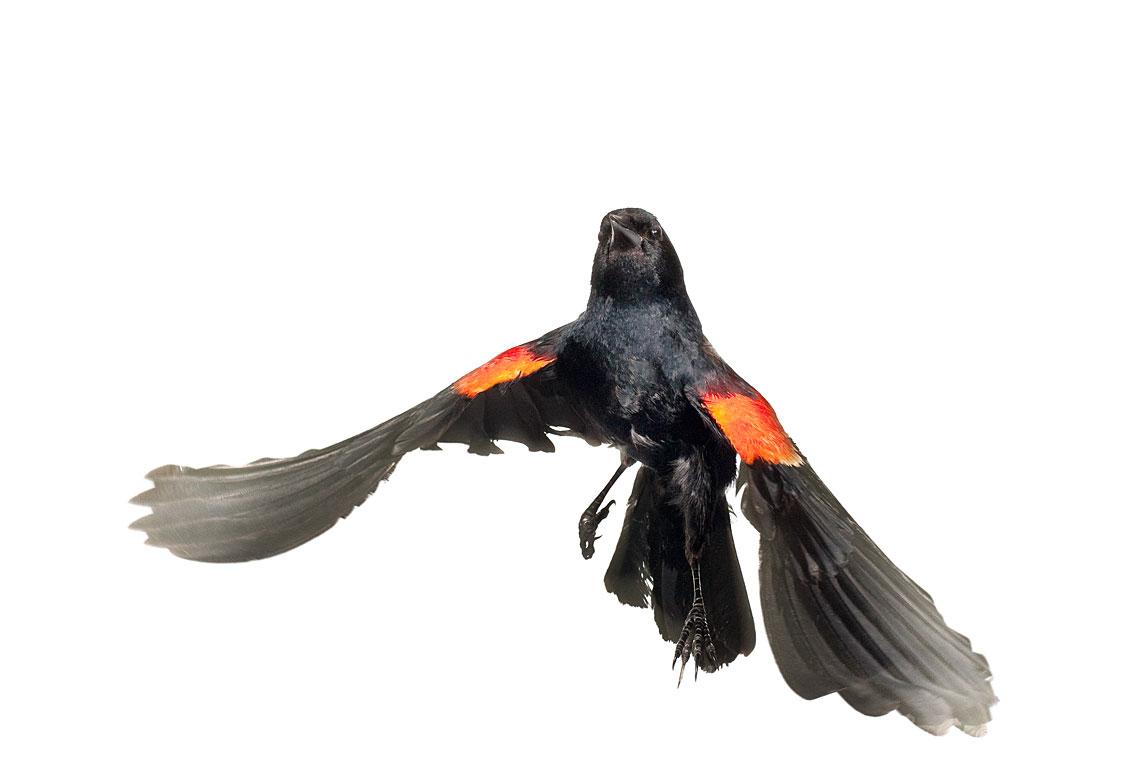 птички 6