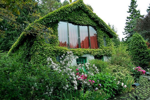 дача и зелень