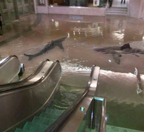 The collapse of a shark tank at The Scientific Center in Kuwait