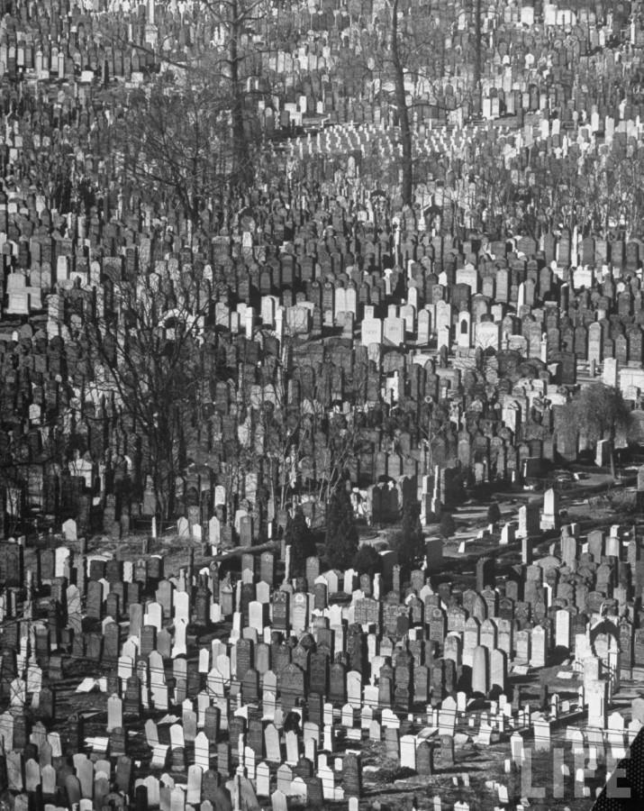 кладбище 8