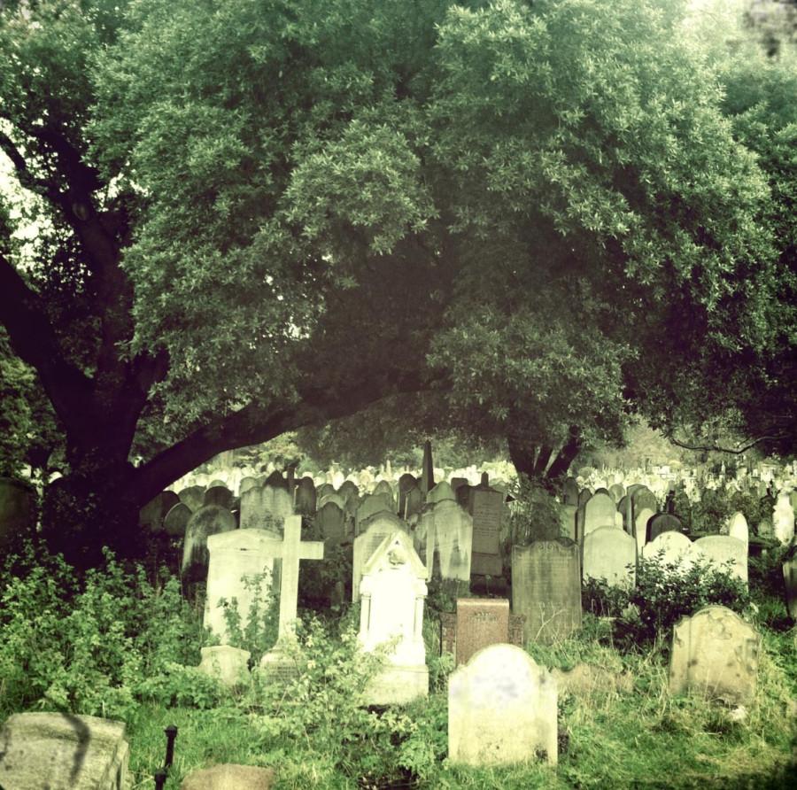 кладбище под деревами