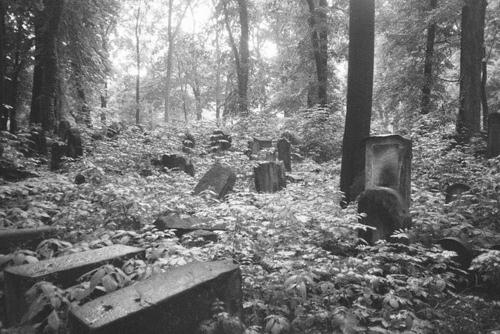 кладбище 6