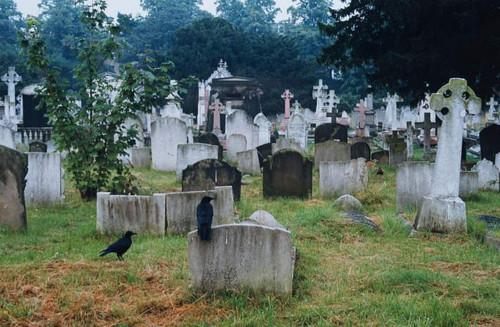 кладбище цветное