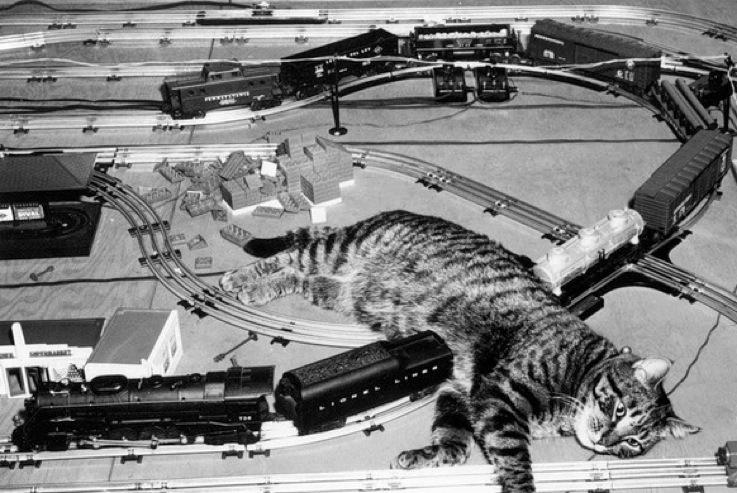 жд и кот