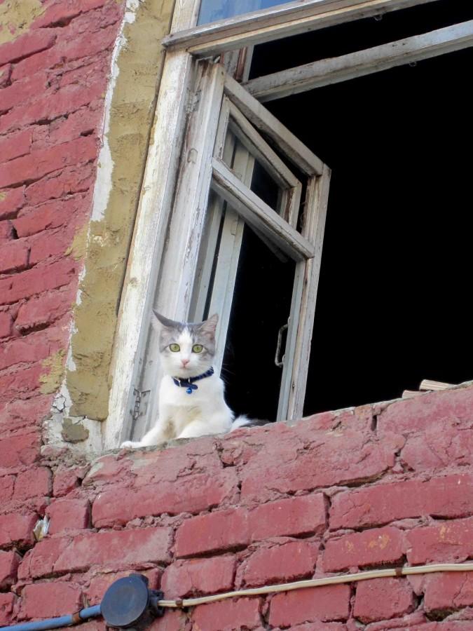 кошка на Первомайской