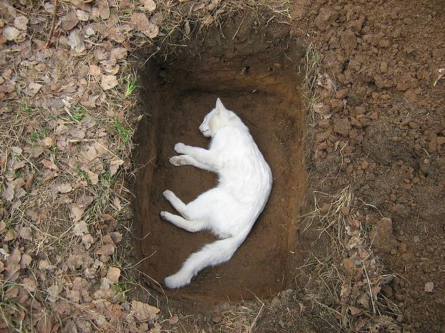 похороны белой кошки