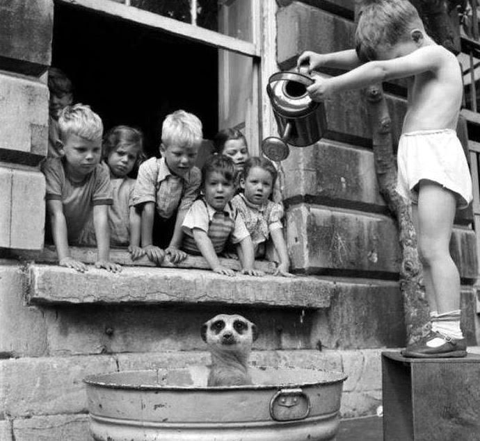 4 дети и енот 1950
