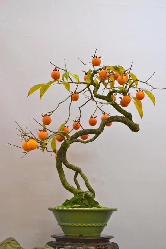 бонсай с плодами