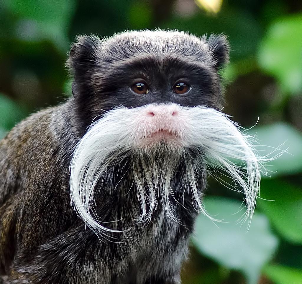 такая обезьяна