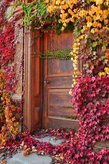 дверь и плющ