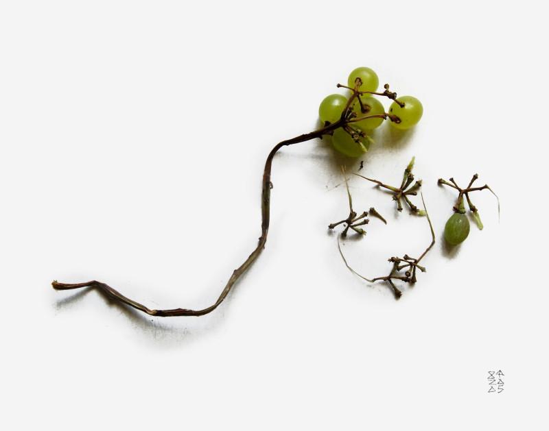 Виноград IMG_4207de001-75.jpg