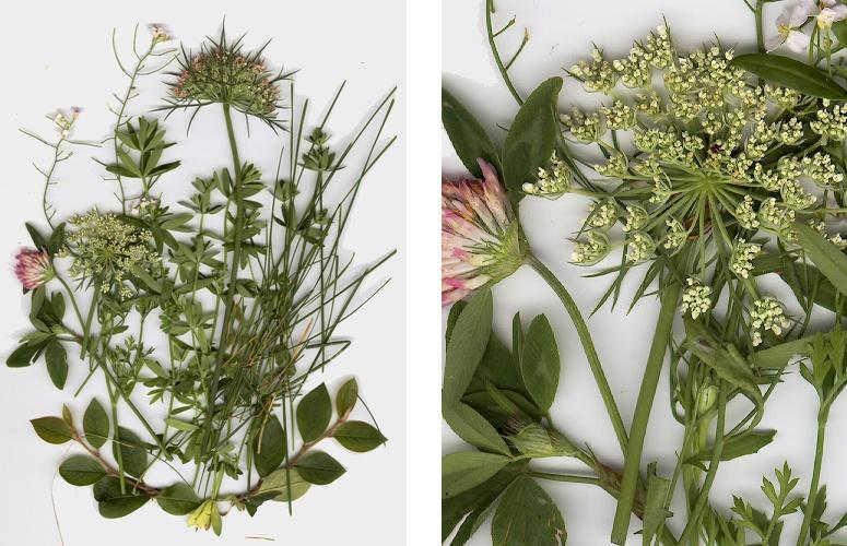 Растения I artlib_gallery-68872-b.jpg