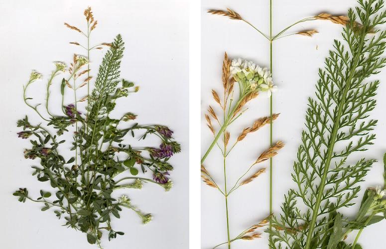 Растения II.jpg