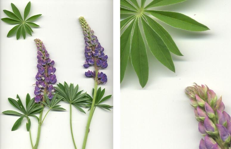 Растения III.jpg