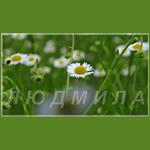 ly_d_mi_la51