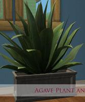 agave-marja