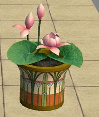 lotus-amovitamsim