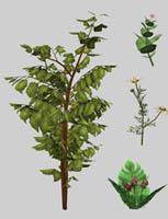 plants - veranka
