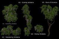 DV wisteria - honeywell