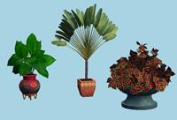 plants - amovitamsim
