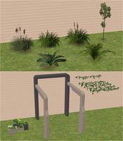 advent 3 plants - veranka