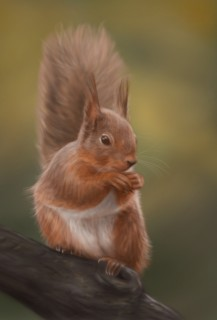 Red Squirrel in digital airbrush