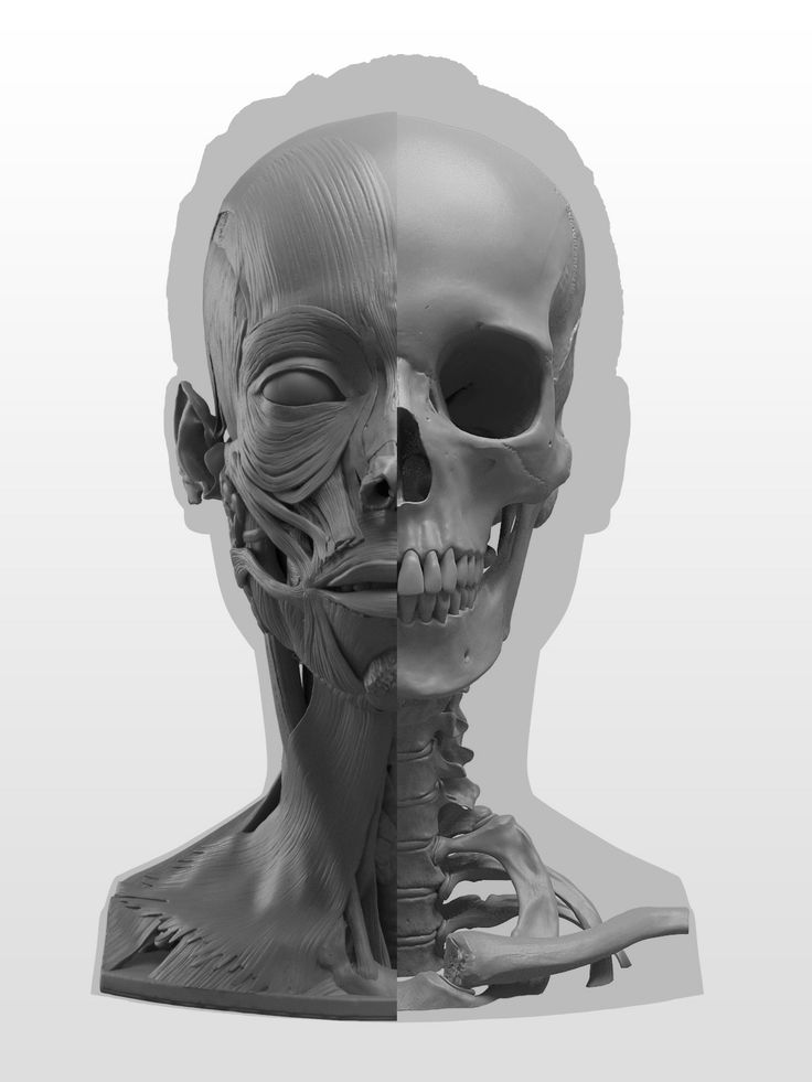 New-Masters-Academy-Anatomy-of-the-Head-Series