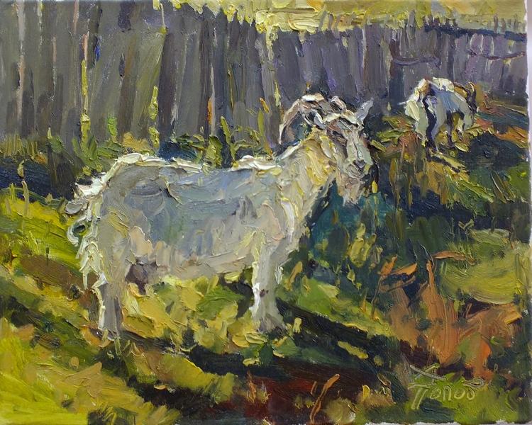 Ширяевские козы