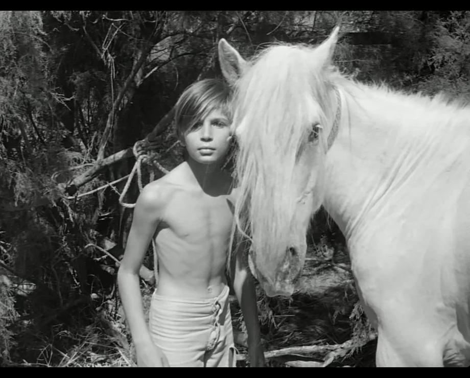 «Белая грива: Дикая лошадь» / «Crin blanc: Le cheval sauvage»