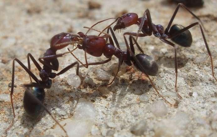 Общение муравьев