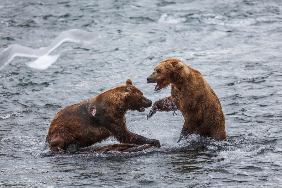 Katmai-Alaska 2012-9213 Web