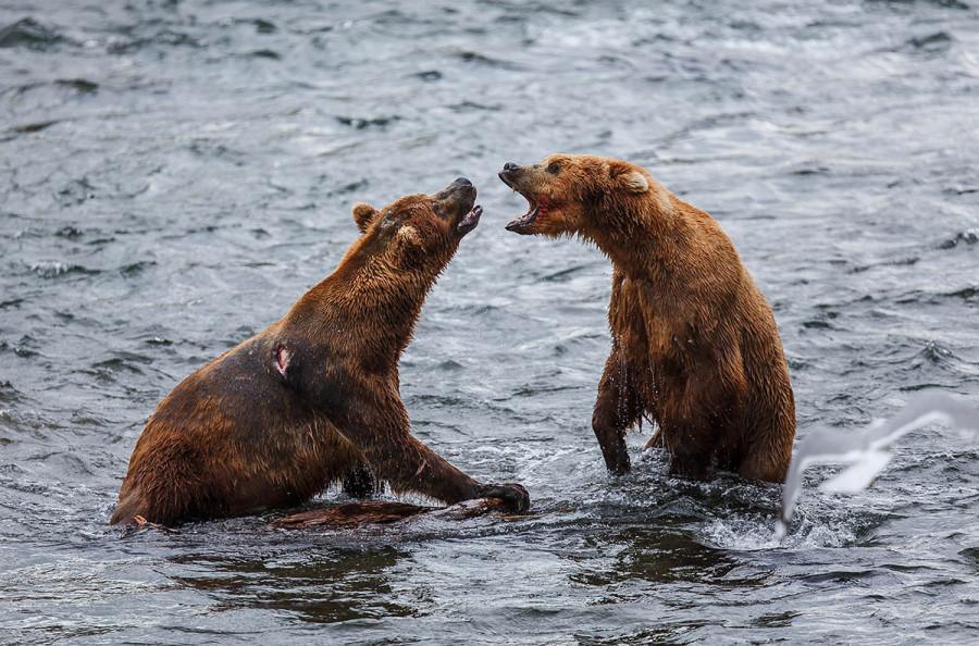 Katmai-Alaska 2012-9214 Web