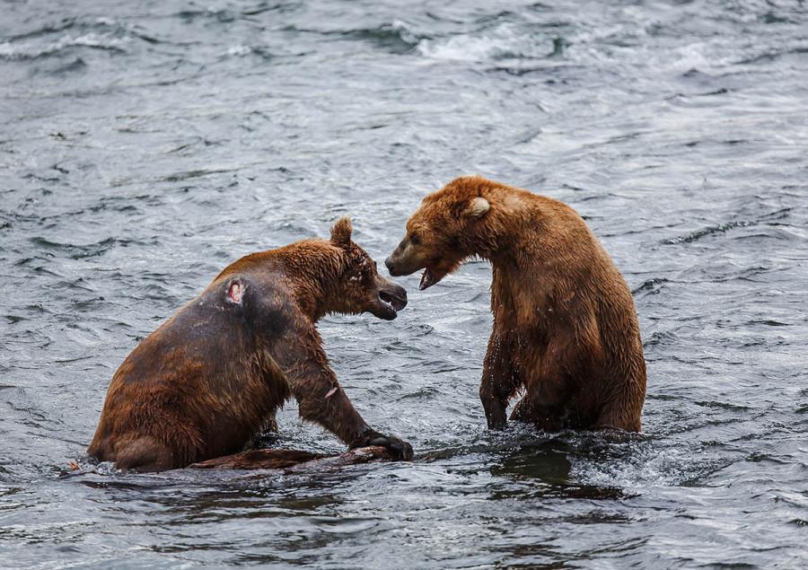 Katmai-Alaska 2012-9216 Web