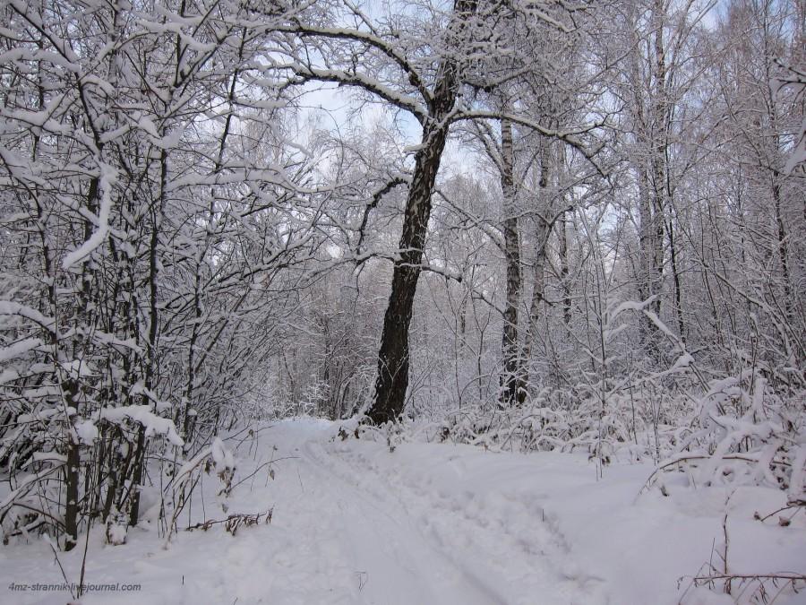 снег 01.jpg