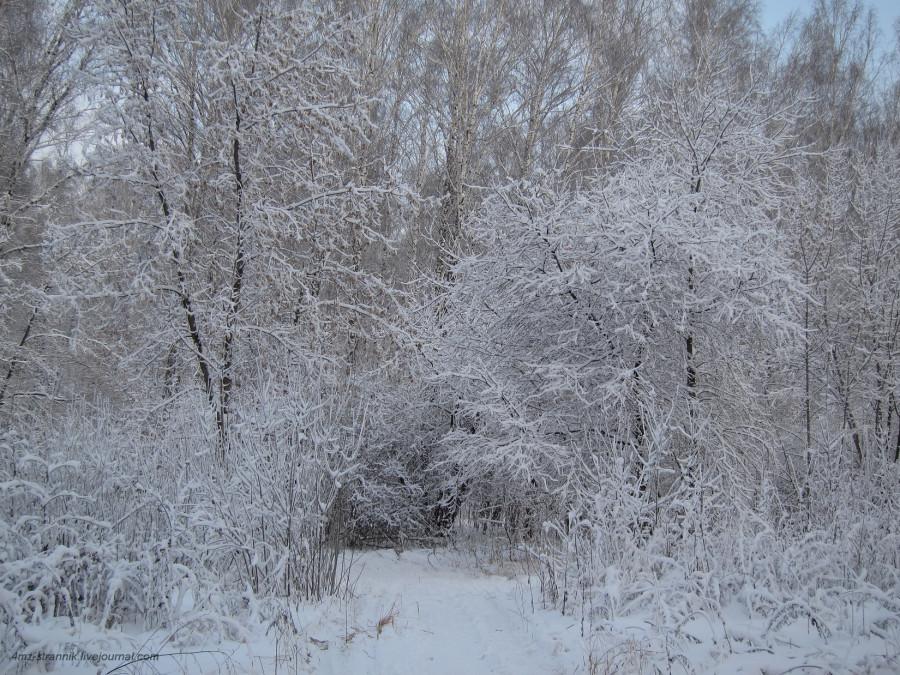 снег 03.jpg